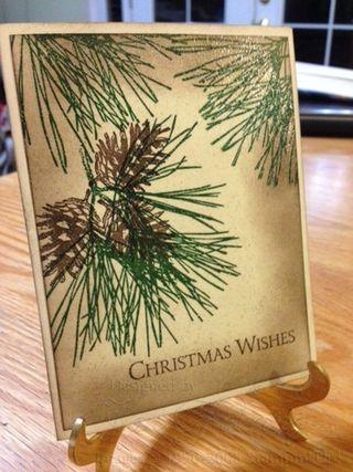 Ornamental Pine 1